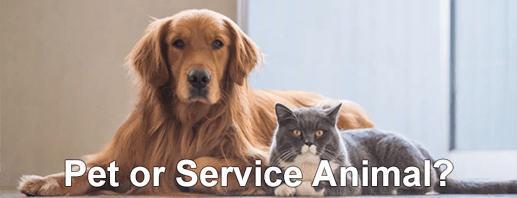 apply to rent with pets